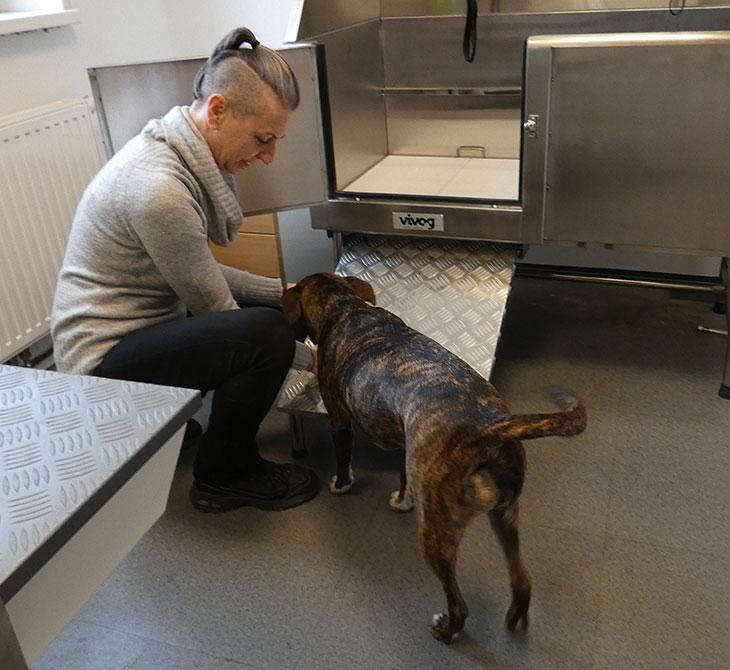 Hundesalon Fibi | Hol- und Bringservice